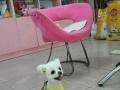 宠物美容、造型、寄养、售卖【阳光宠屋】燕山路北首