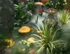 云南昆明酒店咖啡厅餐厅酒吧植物绿植室内软装设计