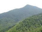 安徽省宣城市450亩林地出租