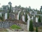 中坡后山墓地联系处002