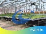 温室蔬菜如何种植-博超苗床