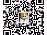 上海广州深圳北京折耳猫批发 搜:双飞猫