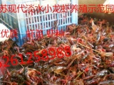 淡水龙虾基地常年供小龙虾种 龙虾苗包技术 包回收,全程专业指导