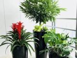 陆家嘴绿化租摆,大型绿植送货上门 鲜花绿植租赁