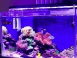 鱼缸清洗,专业师傅,上门清洗各种鱼缸,鱼池,价格低