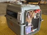 上海寵物托運,寵物物流專車路線規劃