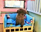 团结湖宠物寄养 长期提供猫猫狗狗寄养服务 房间有暖气可接送