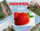 鄂州草莓采摘