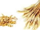 亚芹粮 食专业合作社 大量供应谷物 大 米 小 麦 等