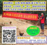 深圳宝安南山销售生态散养土鸡,福田农家鸡走地鸡专卖店