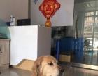 邯郸东城动物医院
