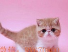 健康的加菲猫 包子脸水滴眼 喜欢的可以加我微信看