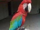 百鸟园资源观赏鸟出租展览百鸟展租赁展览