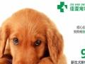 宁波宠物医院-如何挑选心仪的狗狗-佳雯
