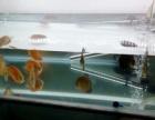 七彩神仙鱼出售
