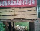 重庆黑山羊养殖场