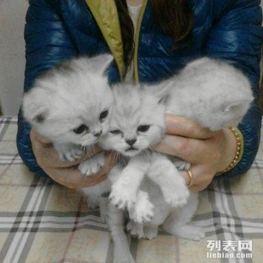 建成猫宝 两个美女三个帅哥