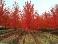 青岛市胶州320亩苗圃转让