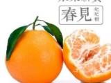 四川春见柑桔苗,宜宾批发春见柑橘果树苗,哪里有耙耙柑桔苗买