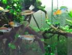 南京鱼缸清洗,观赏鱼