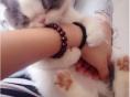 个人尽快胖嘟嘟黑白加菲小猫咪免费找爱猫人士照顾领养啦
