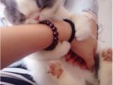 個人盡快胖嘟嘟黑白加菲小貓咪免費找愛貓人士照顧領養啦