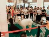 萌宠海狮表演租赁 斑马展览展示标本展览展示广州服务公司
