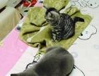 猫猫求有爱心的新主子