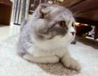 哈尔滨 哪里有卖折耳猫 多少钱