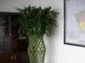 (小花匠园艺)-免费上门设计,花卉租赁,花卉租摆
