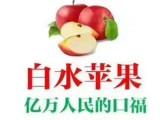 陕西白水苹果 红富士70-85苹果 农户自种 垄泉水果