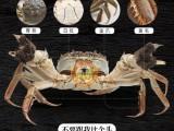 買正宗陽澄湖大閘蟹選蟹狀元的十大理由