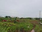 合肥周边两百亩土地