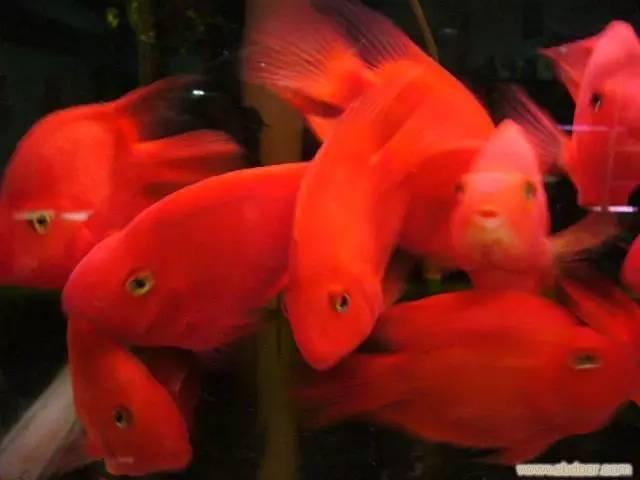 专业鱼缸 鱼池清洗养护