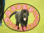 国内较大繁殖基地 出售双血统拉布拉多 神犬小七同款