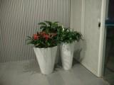 南昌鲜花供应,红谷滩办公租花,南昌芙蓉花卉公司