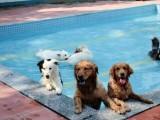 广州有素宠物训练学校 狗狗训犬基地 可接送