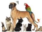 上海宠物火化宠物殡葬浦西宠物火化宠物安葬上门服务电话