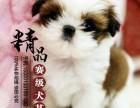 郑州哪里出售西施犬幼犬
