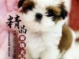 西施犬多少钱一只 北京哪里卖