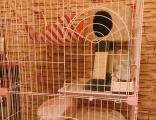 粉色爱丽思猫别墅转让