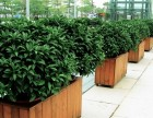 科学城植物出租 科学城植物销售 科学城植物租赁