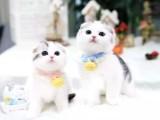 武汉布偶猫出售 自家繁育纯种 品相好 高贵优雅