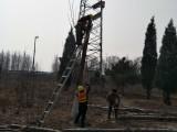 郭师傅专业修树伐树移树