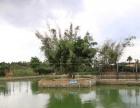 出租勐海勐海乡大益庄园旁边鱼塘及土地