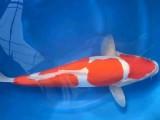 杭州热带鱼专卖