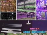 江苏常州提供led植物补光灯生长灯 无极灯等各类植物灯可定制