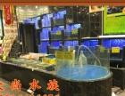 专业设计、制作海鲜池、鱼缸