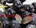 茂名城区家庭日常新鲜水果店配送----茂名市鲜果派