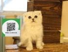 镇江在哪里卖健康纯种宠物猫 镇江哪里出售折耳猫